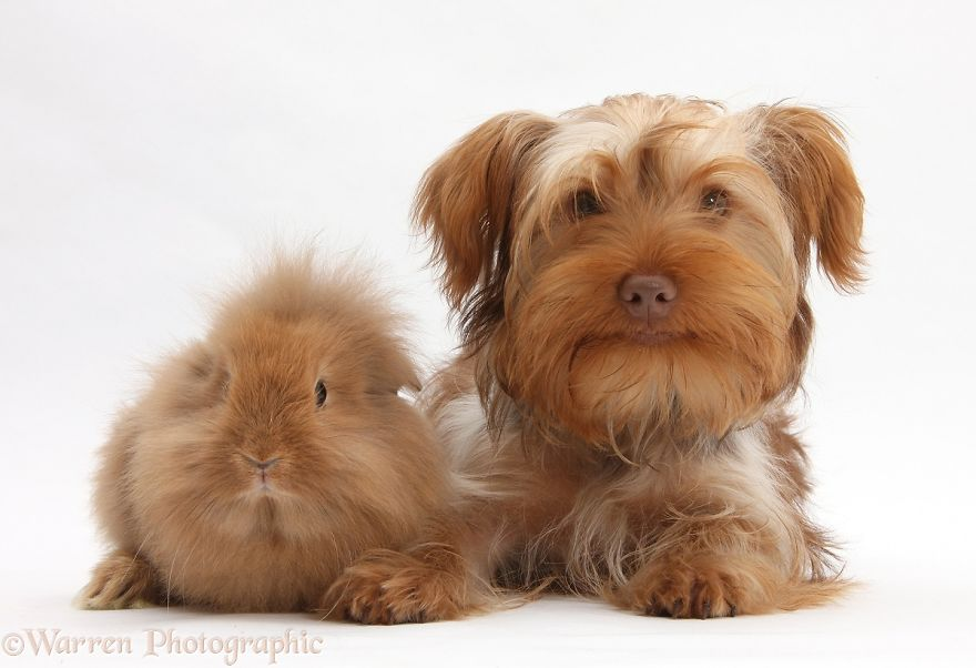 cute-matching-pets-warren-photographic-20-57e935162e382__880