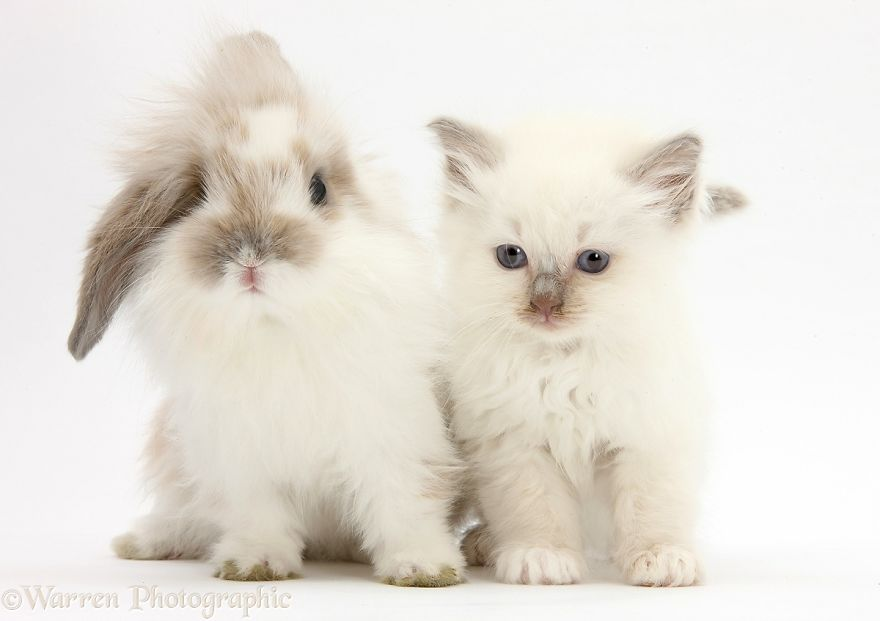 cute-matching-pets-warren-photographic-37-57e935441c279__880