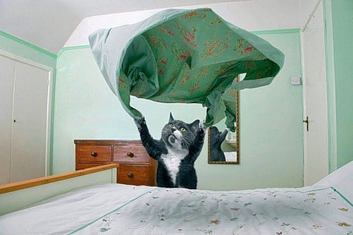 dream_cat_creativing-net_002