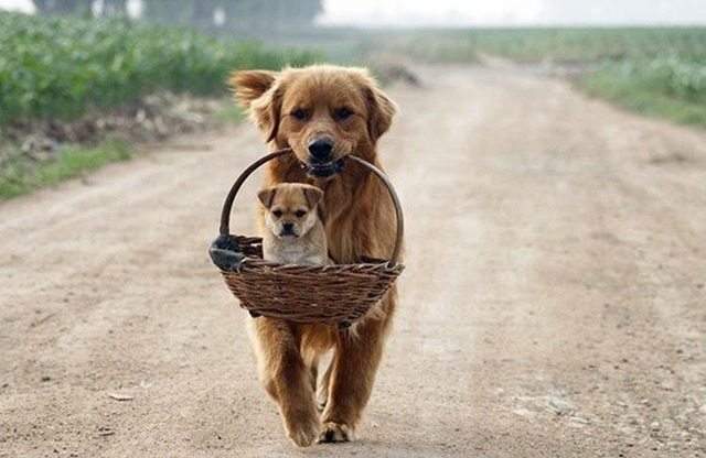 dog-with-puppy-in-basket