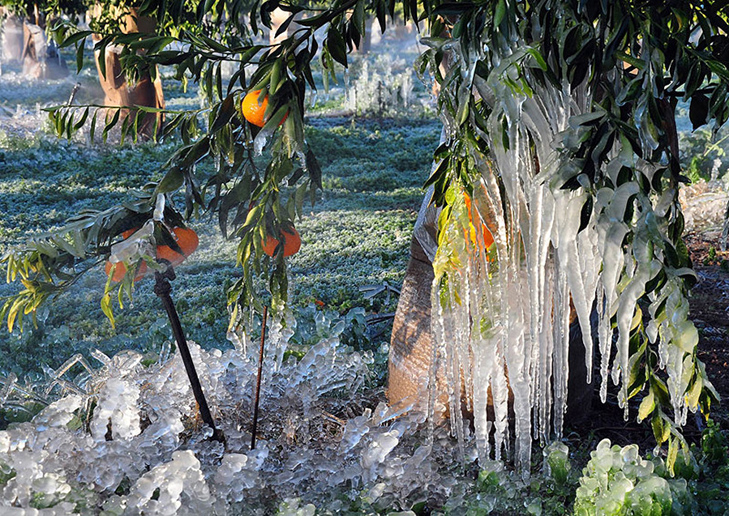 A cold snap with below-freezing temperatures that swept the city of Argos in the Peloponnese has swathed this orange grove in a fairy-tale landscape of hanging icicles and frozen dew - beautiful to look at but a disaster for local orange farmers that have lost an entire crop, in Argos.