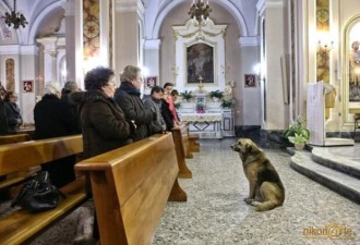 Каждый день собака приходит в храм, ожидая возвращения