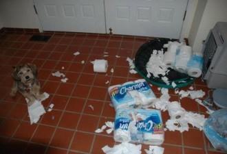 Чем занимаются наши собаки, пока нас нет дома (10 фото)
