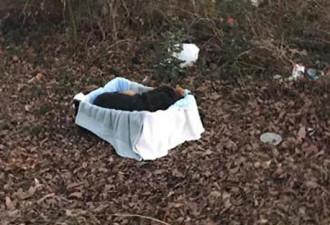 Спасатели обнаружили двух собак, которые дрожали от холода, лежа в ящике! (4 фото)