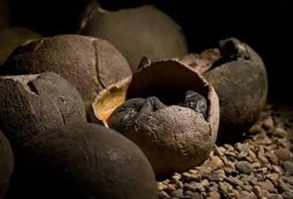 Ученые определили, как быстро динозавры вылуплялись из яиц
