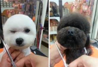 То, что делают в салонах красоты для животных на Тайване, сразит тебя наповал…(7 фото)
