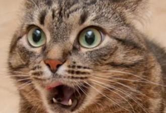 Срочно повезли кота в ветеринарку