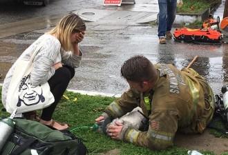 Пожарный реанимировал маленькую собаку с помощью искусственного дыхания «рот-в-рот» (8 фото)
