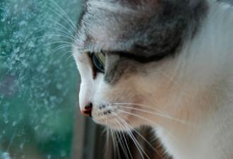 Этого кота от наказания спас невероятный вдох, который растопил сердце хозяйки