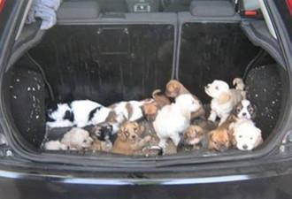 Когда открыли багажник, то что было внутри, шокировало всех…(7 фото)
