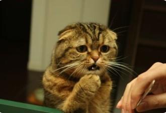 Последствия после выпитой котом валерьянки