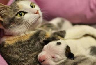 Кошка родила щенка: мутация или генная ошибка? (3 фото)