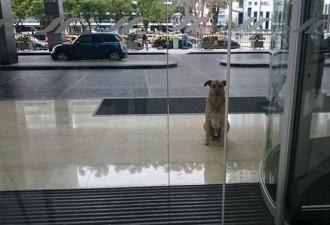 Эта собака 6 месяцев ждала женщину за пределами отеля. Вот, что произошло дальше…(6 фото)