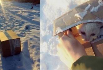 Женщина нашла в снегу коробку. Открыв её, она побледнела от увиденного