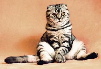 За день приучил упрямую кошку к лотку, хотя до этого полгода мучился