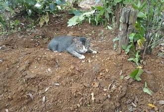 В Индонезии кошка целый год прожила на одном месте, практически не отлучаясь (4 фото)