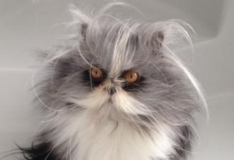 Атчум — забавный кот из Канады, который выглядит, как чокнутый профессор (5 фото)