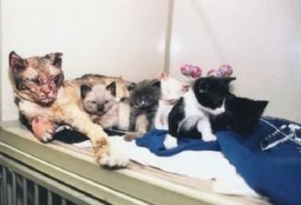 Чтобы спасти своих котят кошка 5 раз возвращалась в горящий гараж (5 фото)