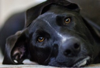 Хорошо подумайте, прежде чем называть собаку своим именем