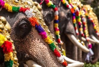 Мир потрясён: толпа в Индии забросала слониху и её малыша зажигательными смесями! (8 фото)