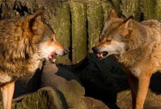 Притча про двух волков! Вы прочитаете это за 20 секунд, а запомните надолго!