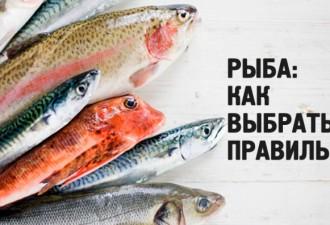 Вся правда о том как правильно выбирать и готовить рыбу