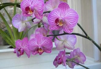 Положите кубик льда в горшок с орхидеей, и увидите как это поможет ей (5 фото)