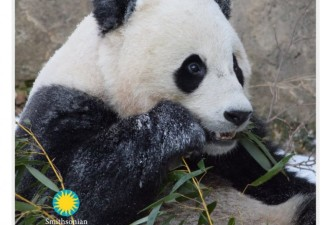 Зоопарки устроили свой флэшмоб (12 фото)