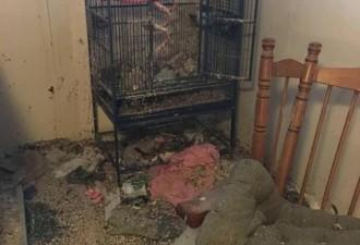 Владелец чуть не потерял сознание, когда увидел свою квартиру после переезда жильцов!