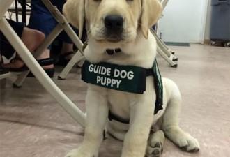 10 собак в первый день службы (10 фото)