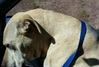 История о последнем дне из жизни этой собаки тронула и возмутила многих… (12 фото)