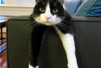 Шкодливый кот ободрал угол дивана, но хозяйка не растерялась (10 фото)