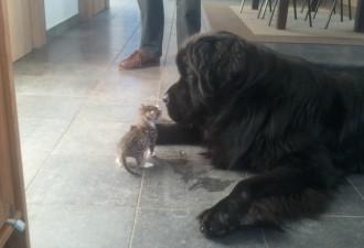 И пес продолжал жить, хотя с каждым днем становилось все труднее
