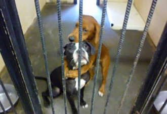 Волшебная сила «Фейсбука»: двух обнимающихся собак спасли от усыпления в самый последний момент (3 фото)
