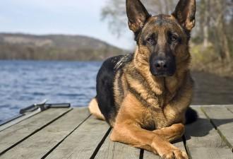 Ваш знак зодиака расскажет, на собак какой породы вы больше всего похожи (12 фото)