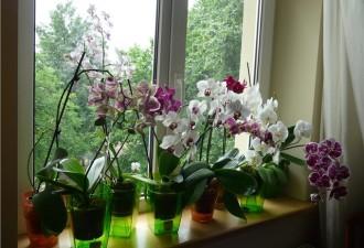 НИКОГДА, никогда не держите орхидею дома!