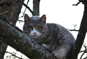 Еще девчонкой полезла на дерево спасать кота, в итоге пришлось спасать обоих