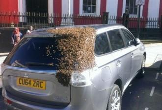 2 дня пчелиный рой атаковал машину этой женщины (4 фото)