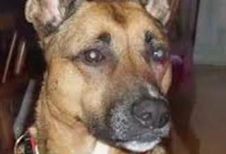 Члены семьи были взволнованы тем, что их новая собака садилась рядом с их кроватью каждую ночь (3 фото)