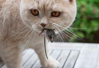 Кошачьи развлечения