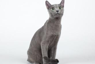 Выберите кота, а мы угадаем ваш знак зодиака (20 фото)