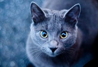Ошейник-переводчик с кошачьего языка на человеческий (2 фото)