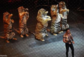 Сразу 2 страны в Европе запретили животных в цирке! Вы — за?