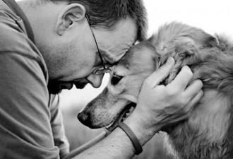 Почему потерять собаку иногда тяжелее, чем потерять друга или родственника… (3 фото)