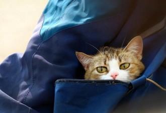 Котенка мы нашли в вагоне, который проехал полстраны