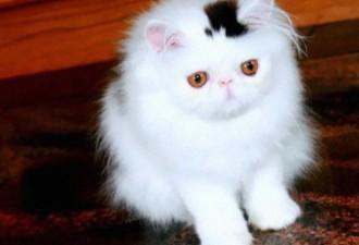 12 чудных кошек с самыми уникальными окрасами в мире (12 фото)