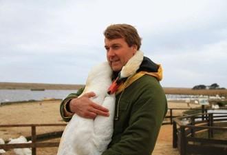Мужчина спас лебедя и в благодарность птица сделала то, что никто не ожидал увидеть (4 фото)