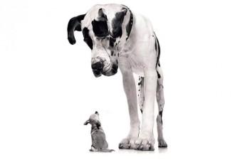 На полутемной пустой стоянке черным столбиком — одинокий пес. Переминаясь с ноги на ногу…