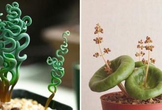 10 комнатных растений, в существование которых Вы не сможете поверить! (10 фото)
