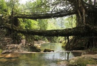 Чудо природы: живые мосты Черапунджи (5 фото)